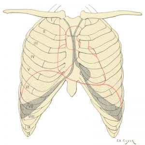 Ejercicios de respiración para cantar y abrir Costillas