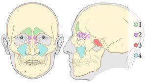 Ejercicios para cantar fuerte: Resonadores vocales superiores